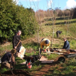Mulching around trees at Follaton arboretum in the spring